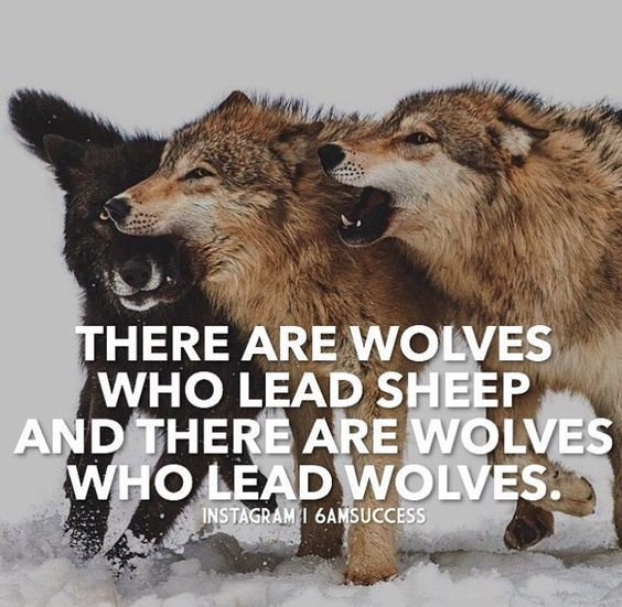 Funny lone wolf quotes