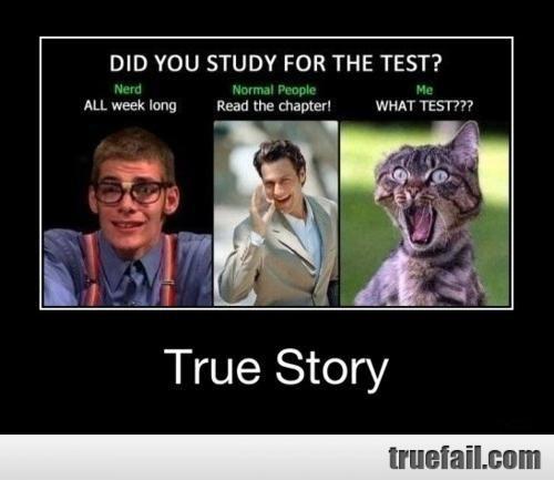 100 Funniest Cat Memes Ever - bestlifeonline.com