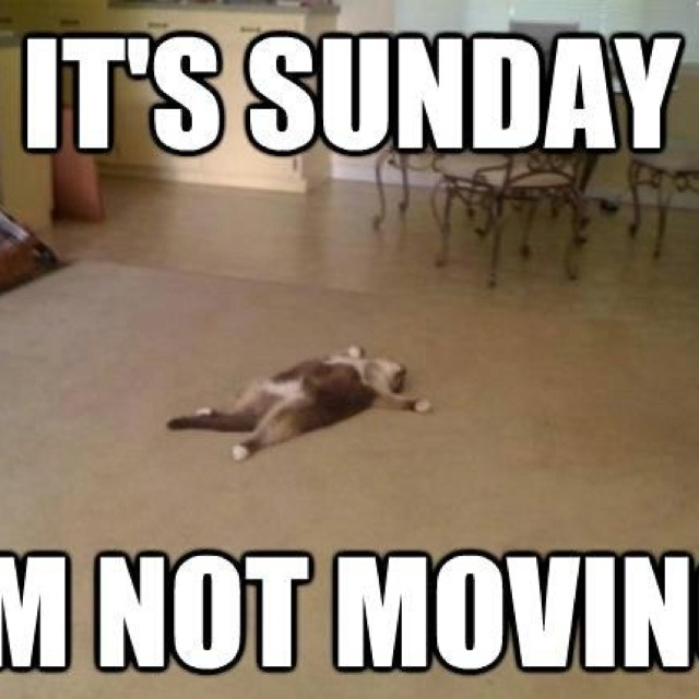 Top 29 Happy Sunday Funny Images